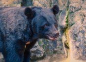 なぜクマは里に下りてきたのか?生態を知って被害を減らすためにできること